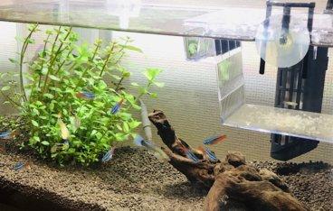 熱帯魚が泳いでいる水槽の写真