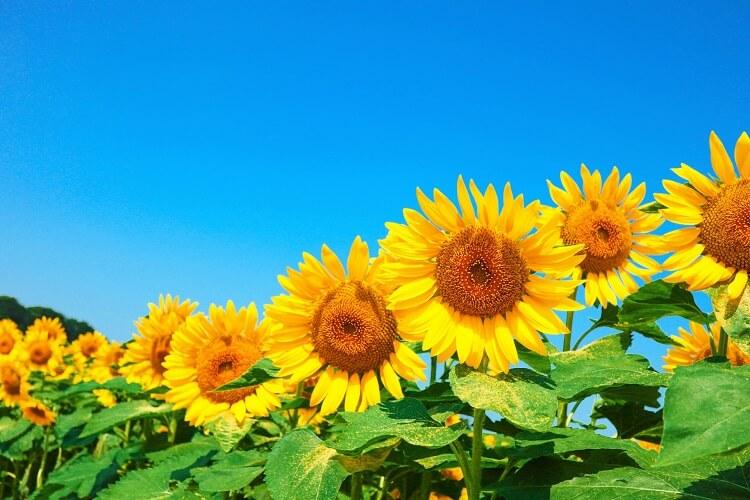 8月、夏がきます!