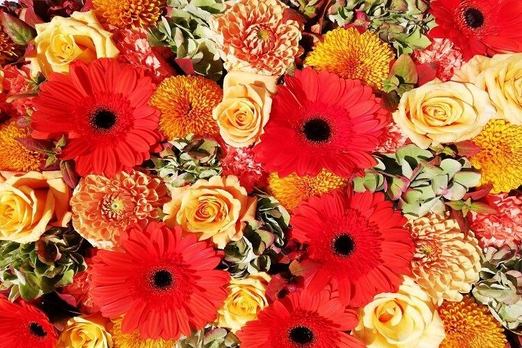 元気がでるお花の写真